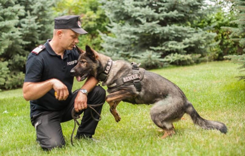 Povestea câinelui salvator de la IJSU Vaslui Sasha