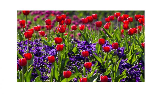 Ce flori se pot planta toamna în grădină