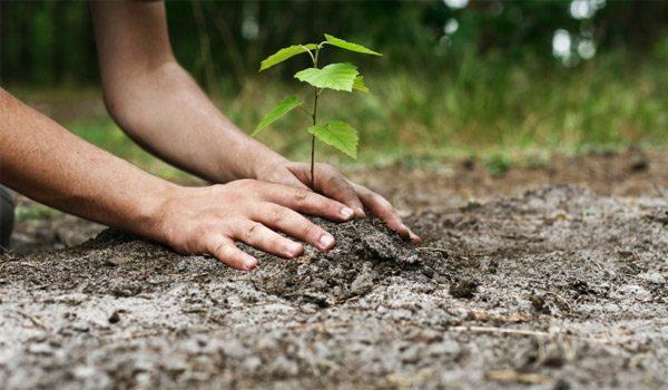 Începând din 15 septembrie APIA primește cereri de sprijin pentru accesarea Schemei de ajutor de stat Sprijin pentru prima împădurire și crearea de suprafețe împădurite Vezi termenul limită