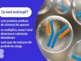 De ce scad anticorpii în timp Scăderea lor este normală și arată că sunteți sănătoși