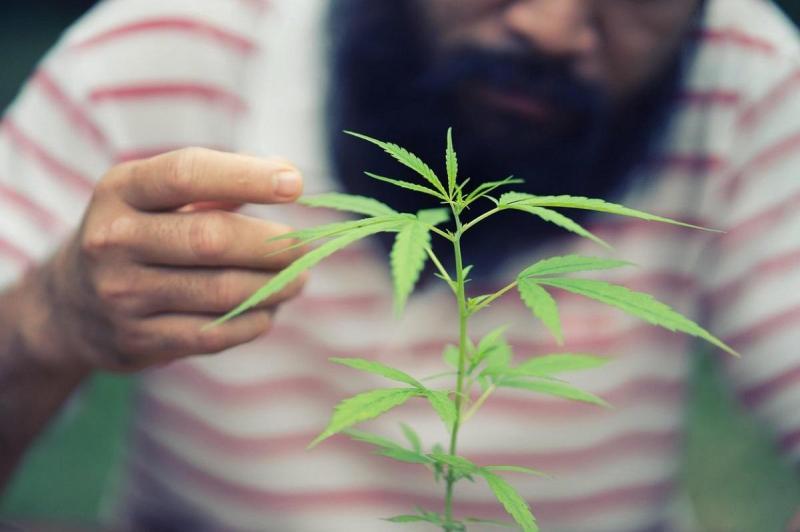 Italienii au strâns suficiente semnături pentru a organiza un referendum în vederea legalizării consumului de cannabis