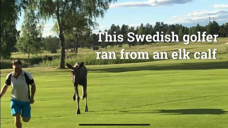 VIDEO  Reacția ambasadei Suediei la București după ce Klaus Iohannis a vorbit despre golf  Filmulețul amuzant postat pe rețelele de socializare