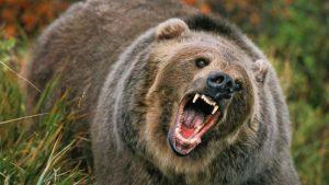 Autoritățile din Neamț  maraton de pregătire pentru intervenția la urs