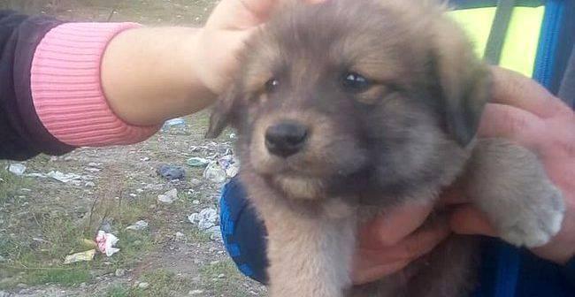 Jucatorii de la Politehnica Timisoara incurajeaza adoptia de caini Parada speciala la meciul cu Miercurea Ciuc